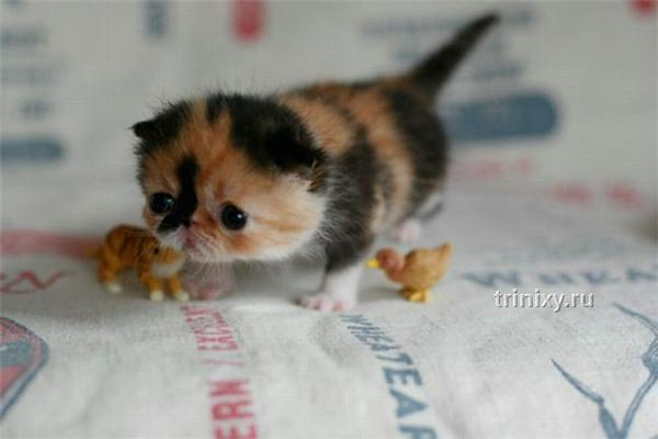 Эмо-кот. Самый очаровательный котенок в мире...