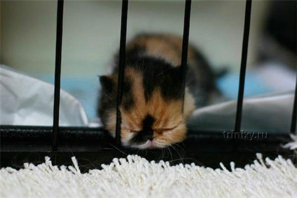 Емо-кіт. Найчарівніший кошеня у світі ...