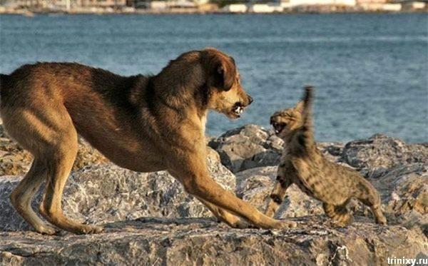 Позитив дня. Труси на блискавці, хлопчик і собака на попці