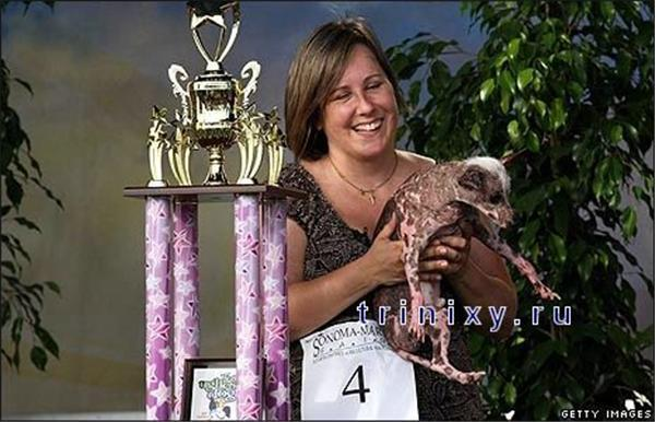 Найбільша потворна собака - 2008