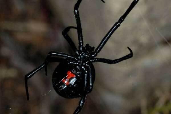 Ядовитые пауки искусали четверых жителей Херсона