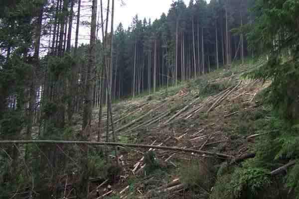 Вырубка карпатских лесов грозит новыми наводнениями