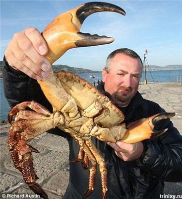 Спійманий краб-гігант, він же - вбивця рибалок