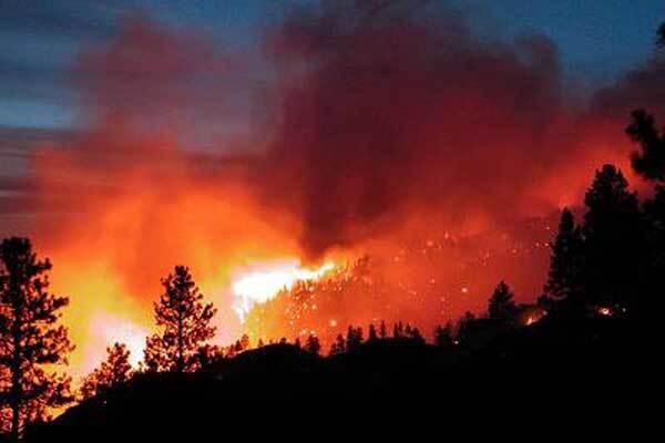 В Харькове сгорел лес