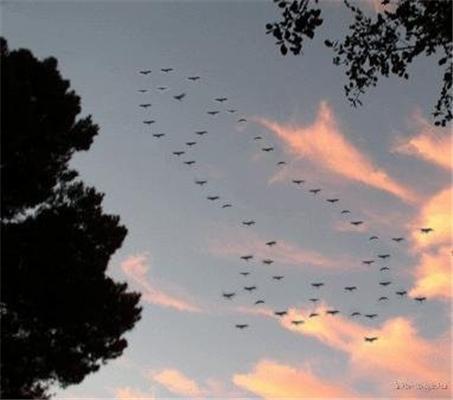 Так ось як, виявляється, птахи летять на йух ...