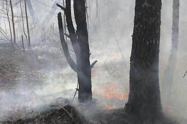 Пожар на Черниговщине уничтожил 10 домов