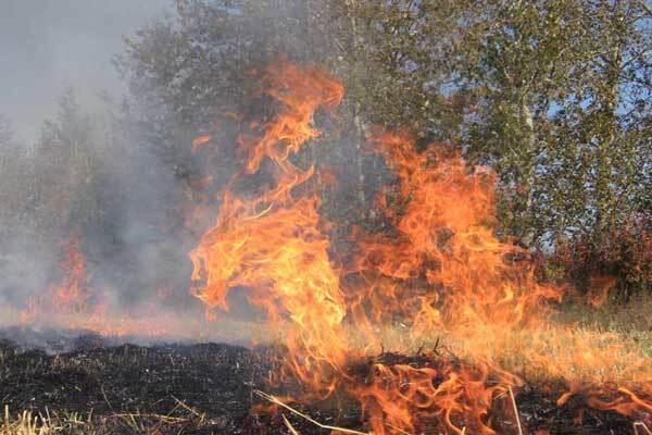 На Харьковщине огонь уничтожил 1,5 тыс. га леса