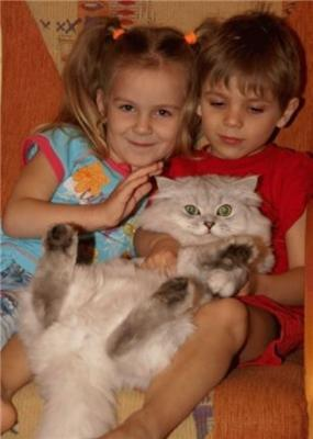 Дівчинка і хлопчик смикають кицьку дівчинки