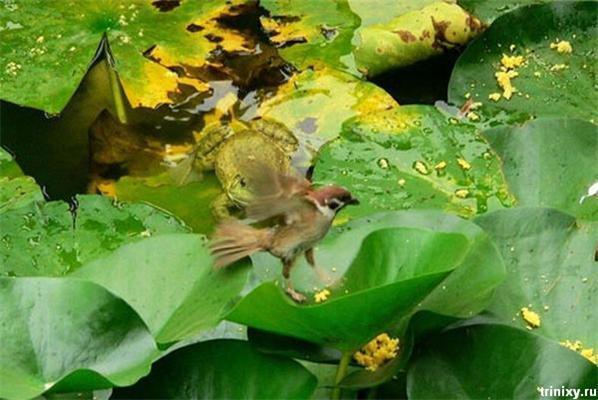 Жесть. Чижик воду пив, але тут прийшла жаба з черевцем ...