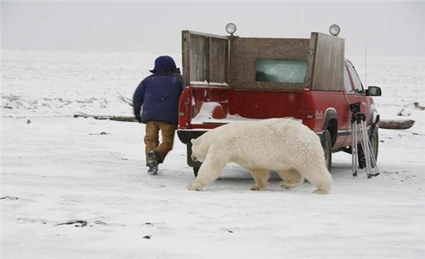 Писец, белый как Медвед, подкрался незаметно...