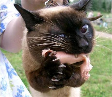 """""""Отдай сосиску!"""" Прикольные котики со всего интернета"""