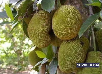 Топ 10 самых экзотических фруктов