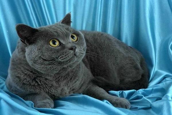 Чоловіка засудили до 6 місяців в'язниці за вбивство кота