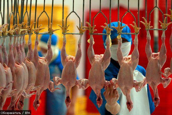 Европа проверит украинскую курятину