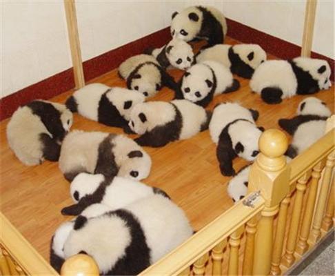 Місія з порятунку панд
