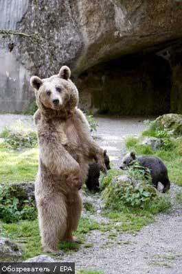 По столиці Словенії розгулював дикий ведмідь