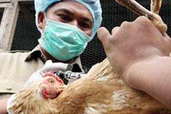 Шестирічний дитина померла від пташиного грипу в Єгипті