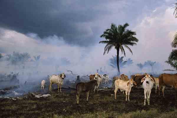 Глобальное потепление ежегодно убивает 300 тысяч землян