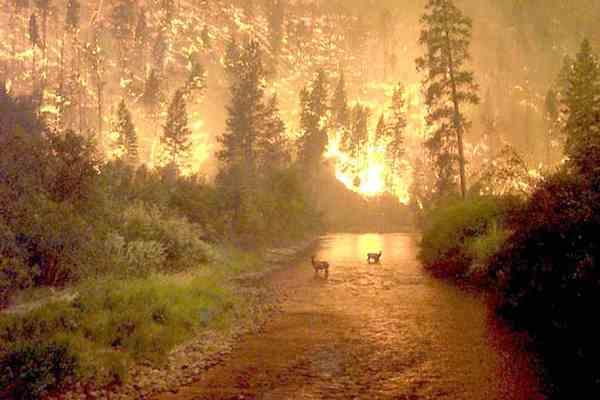Американцы тысячами убегают от лесных пожаров
