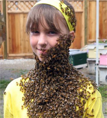 Лечение пчелами - путь во власть?