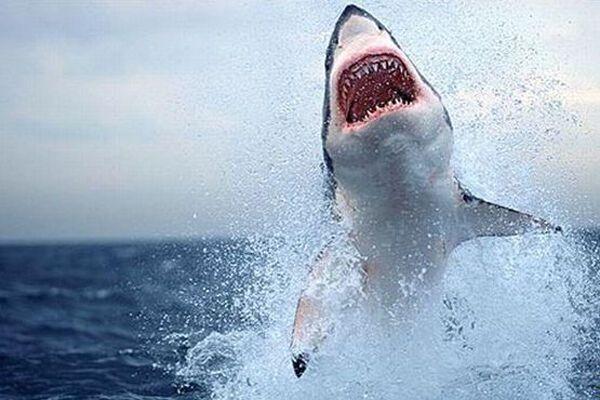 Акула запрыгнула в прогулочную лодку