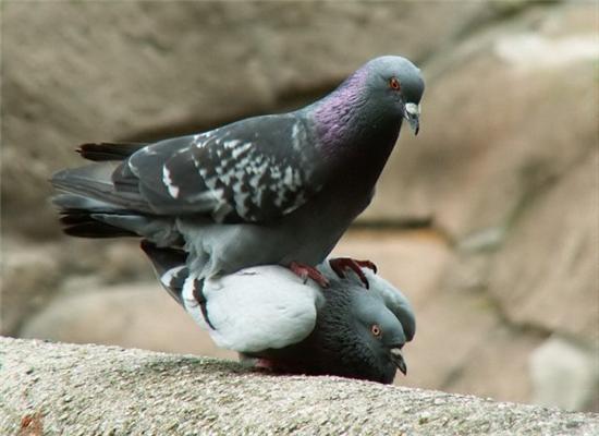Звірячий секс. Всі тварини роблять ЦЕ