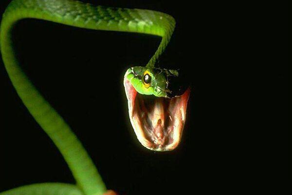 МЧС-ники уничтожили змей возле «Дома ребенка»