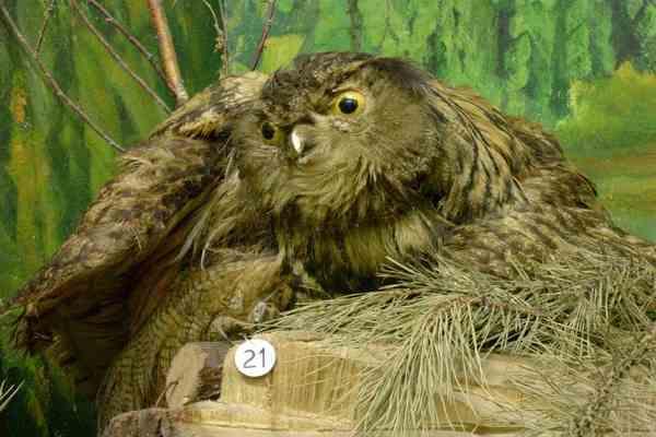 Из британского музея унесли три сотни птичьих чучел