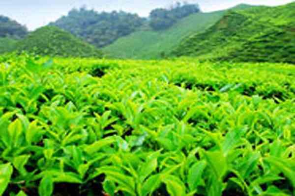 Оползни отрезали от внешнего мира чайный центр Индии