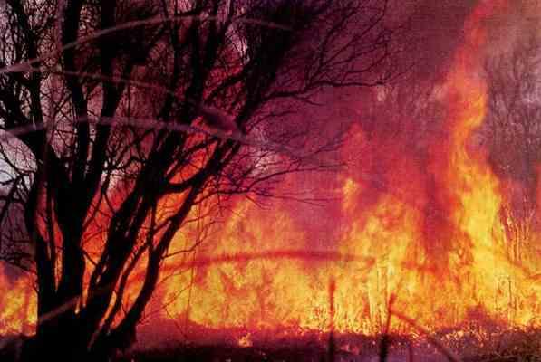 К тушению пожаров в окрестностях Афин приступила армия