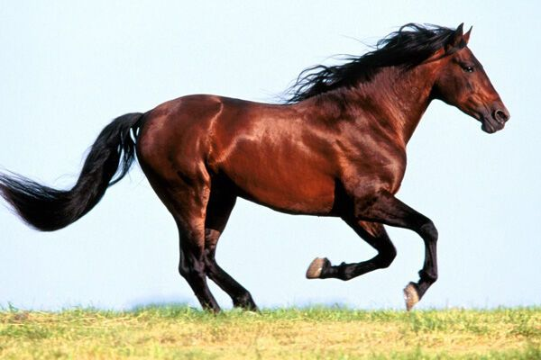 Пансионатам Евпатории поставляли конину под видом говядины