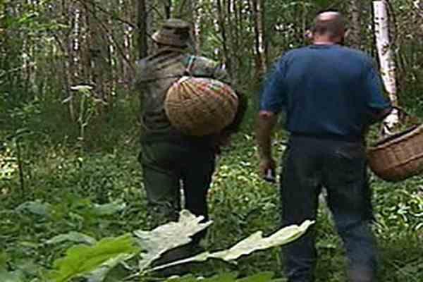 Гигантский съедобный гриб обнаружили на Кубани