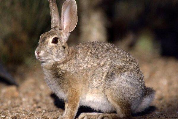 Охотник не смог отличить женщину от зайца