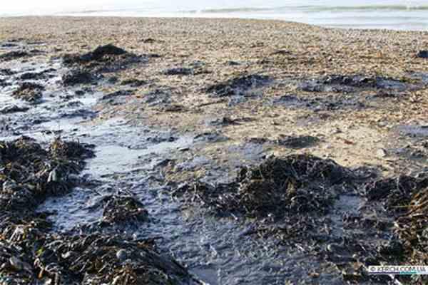 Тысяча тонн разлитой нефти вызвала экологическую катастрофу