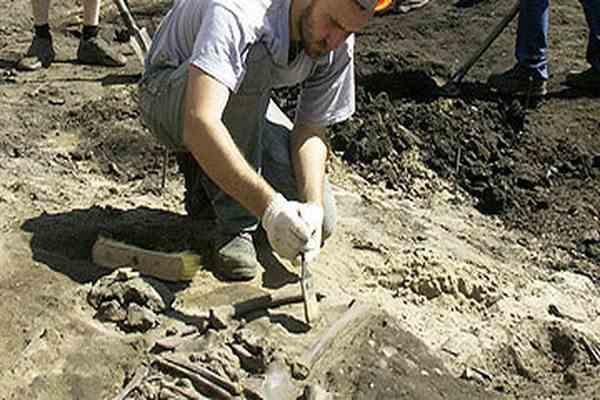 В Польше построят парк юрского периода