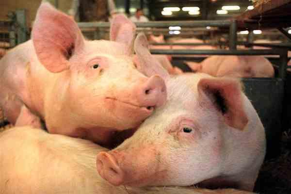A/H1N1 поможет бороться с биотеррористами
