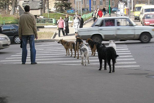 Пожилую женщину чуть не съела свора уличных псов