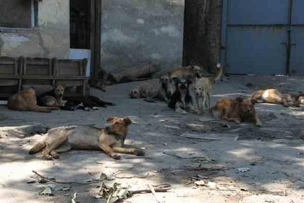 Стая бездомных собак покусала депутатку возле парламента
