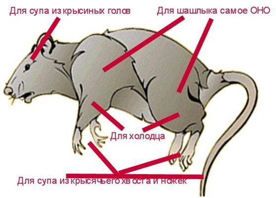 Новинки меню: крысы, кошки и змеи (РЕЦЕПТЫ)