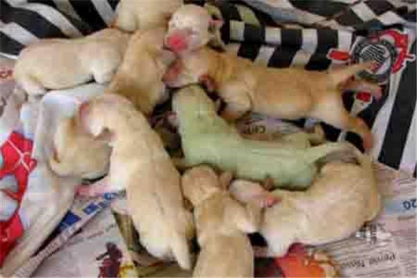 В Бразилии родился щенок зеленого цвета. ФОТО