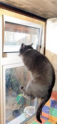 В Австралии кот спас дом от пожара. ФОТО