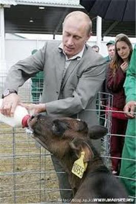 Берлускони упал в обморок, когда Путин вырезал сердце оленю