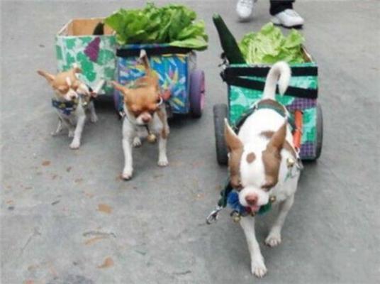 Собака-Барабака і декольте в півстіни. Позитив дня