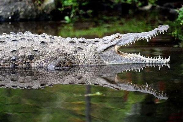 Киска на груди девушки и раздавленный крокодил. Позитив дня