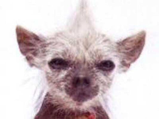 Самые страшные собаки в мире. ФОТО