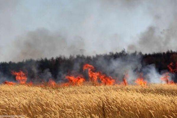 МЧС: в России горят 190 тысяч гектаров. ФОТО