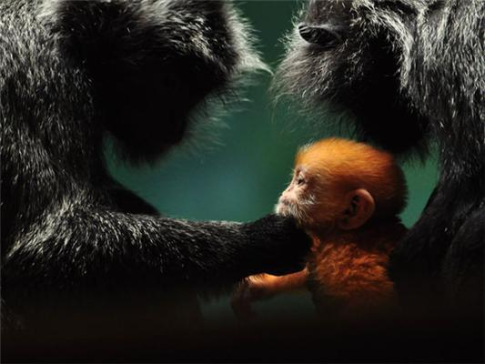 National Geographic: найкращі фото за тиждень