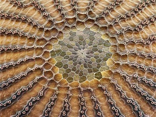 Макро фото: Яйця комах