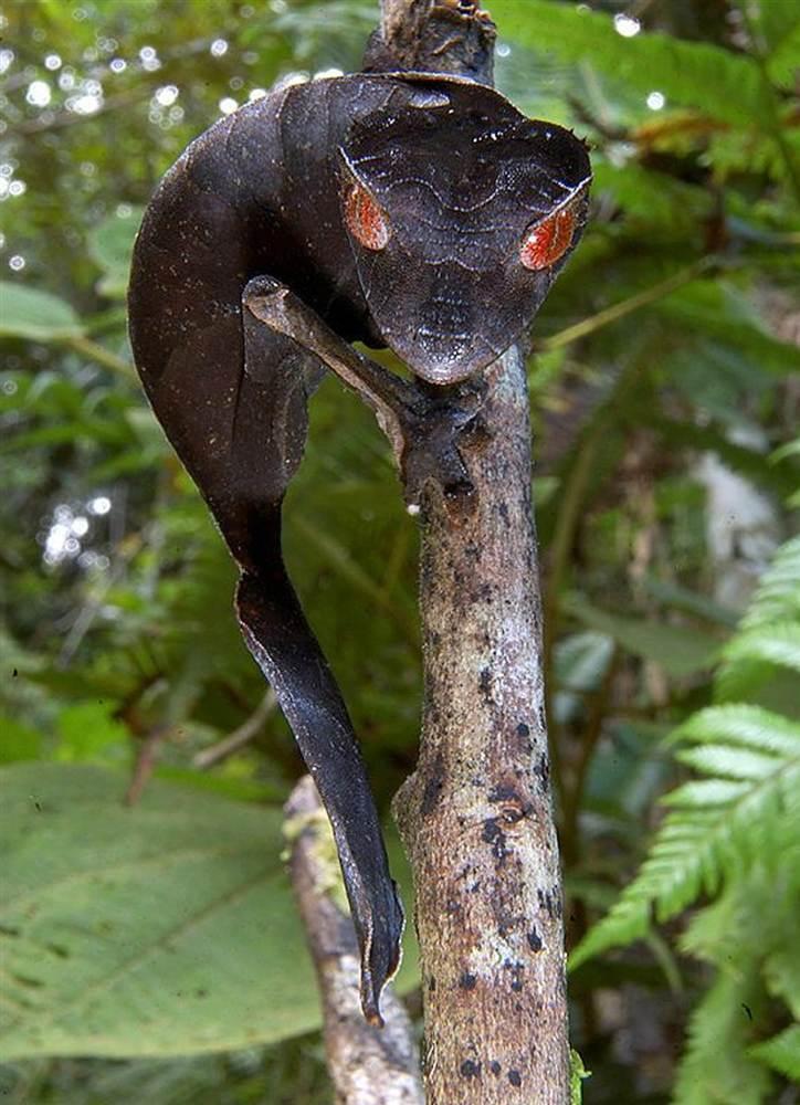 картинки самых необычных животных редких увеличения