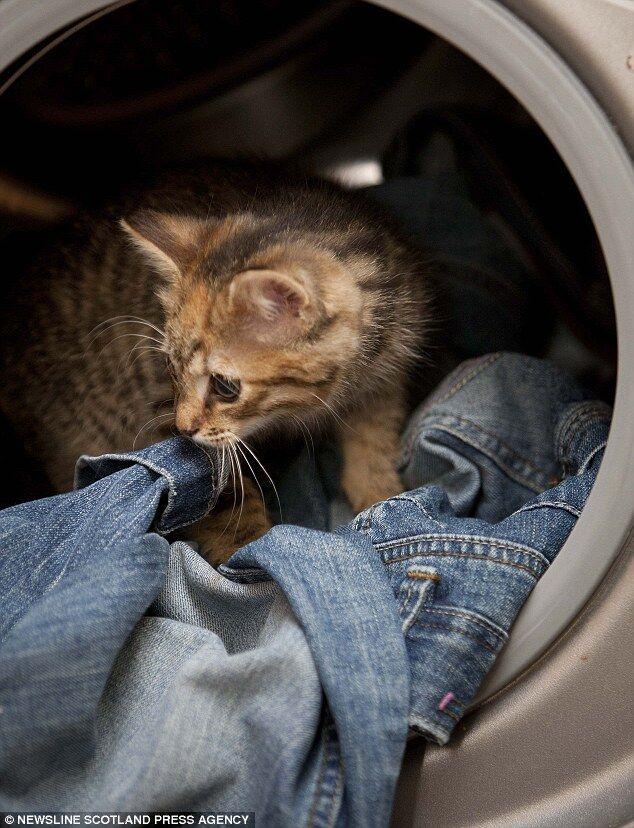Котенок выжил после стирки в машинке. Фото